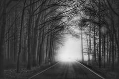 follow the light (***étoile filante***) Tags: dream licht light wald forest foggy fog neblig mystisch mystical mysterious mystic bw blackandwhite schwarzweiss sw trees tree bäume baum street strase nebel pentax cold kalt monochrome nature natur