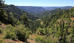 Mt. Misery Backpack, July 2017 (fly flipper) Tags: backpackingwashington bluemountains dunlapspring hikingwashington indiancorral mtmiserytrail oregonbuttelookout oregonbuttespring seteepeetrailhead umatillanationalforest wenahatucannonwilderness