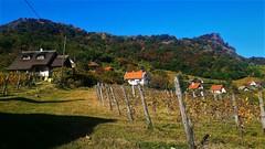 Őszi látkép a Szent György-hegyi szőlőkkel (Hegymagas) (milankalman) Tags: mountain landscape vineyard autumn sunshine hungary balaton
