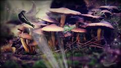 secrets II (MoodsWingz Designs) Tags: fairy aelfs mushrooms forest autumn fall magic love story sparkles imagination