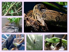Mal aimés (Raymonde Contensous) Tags: paris pzp zoodevincennes parczoologiquedeparis animaux nature serpents araignée néphile roussette