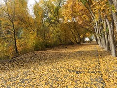 IMG_2809 (August Benjamin) Tags: provo provoriver provorivertrail fall utah mountains provocanyon fallcolors autumn trees leaves orem utahvalley jogging