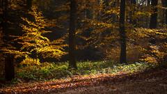 (2D110) Tags: 2470mm nikond750 nature arbres lumière forêt
