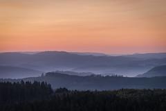 forest series #125 (Stefan A. Schmidt) Tags: warstein nordrheinwestfalen deutschland de forest dawn goldenhour pentaxart landscape