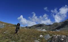 Nasco regarde les oiseaux... (bulbocode909) Tags: valais suisse nendaz lacdugranddésert chiens nature montagnes paysages nuages vert bleu rochers groupenuagesetciel