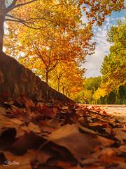 Otoño (Silvia Illescas Ibáñez) Tags: otoño lumix lumixg7 g7 hojas leafs marron brown cold arboles trees nature naturaleza park parque paseo cielo sky valencia