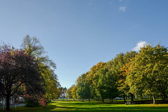 Clifton Green, York (Allan Rostron) Tags: yorkshire york suburbs plants trees