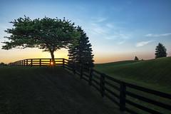 Sunrise in Caledon (B.E.K. Photography) Tags: caledon ontario canada sunrise morning early trees tree field farm hills fence orange white blue yellow green sky clouds horizon sun sunburst outdoor landscape nikon nikond850 nikon1735f28
