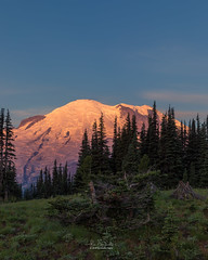 Alpenglow at Mt. Rainier during sunrise, at Sunrise visitor center (MagicPixls) Tags: milkyway mtrainier tipsoolake wildflowers