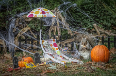Wouldn't you rather have some Smarties! (hey its k) Tags: 2018 backyard halloween skeleton squirrels img8267e canon6d candy pumpkin lounger inexplore