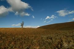Autumn soon (steveniceton.co.uk) Tags: autumn moors moorland northyorkmoors northyorkshire england landscape landscapephotographer