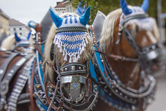 October Fest Parade - Trachtenumzug (suzanne~) Tags: lensbaby edge50 oktoberfest 2018 octoberfest horse animal beerwagon
