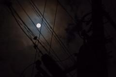 中秋の名月の翌日 (tsubasabs) Tags: 2018年 dscrx10m4 electricalwire harvestmoon rx10m4 sony telephonepole moon ソニー 中秋の名月 月 電柱 電線