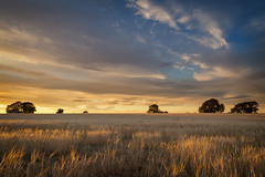 Shadows (G-WWBB) Tags: shadows sunlight sunset clouds fields trees sky landscape yorkshire warmskies canon canonphotography canon6d leeds