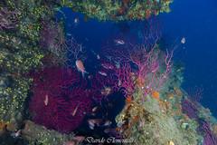IMG_1394 (davide.clementelli) Tags: diving dive dives padi immersione immersioni ampportofino portofino liguria friends amici underwater underwaterlife sottacqua