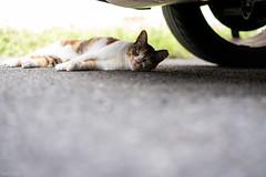 猫 (fumi*23) Tags: ilce7rm3 sony katze 85mm fe85mmf18 sel85f18 street neko a7r3 animal cat chat gato feline 猫 ねこ ソニー