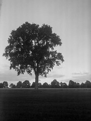 Lonely storyteller (Rosenthal Photography) Tags: ilfordfp4 asa125 ilfordlc2912921°c12min landschaft 9x12 20181001 schwarzweiss rodenstock9x12 grosformat epsonv800 analog hesedorf lonelytree storyteller tree field autumn september landscape mood sun clouds rodenstock anastigmant eurynar 135cm f45 ilford fp4 fp4plus lc29 129 epson v800