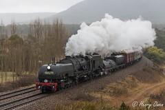 Torrential Towrang (Henry's Railway Gallery) Tags: 6029 ad60class garratt steamlocomotive steamtrain heritagetrain thnsw transportheritagensw passengertrain 6s80 towrang