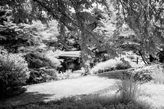 Trail Around the Pond (Neal3K) Tags: fayettecountyga fayettevillega 590nmir infraredcamera kolarivisionmodifiedcamera