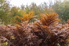 Colori d'autunno (vitodinapoli) Tags: nature autunno autumn pollino calabria italia italy montagna colori