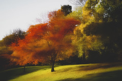 Autumn ... (Julie Greg) Tags: autumn autumn2018 nature nautre park colours canon texture tree trees leafs soft metepark grass