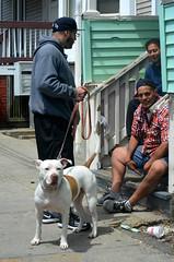 DSC_0116 (watchfuleyephoto) Tags: pitbull