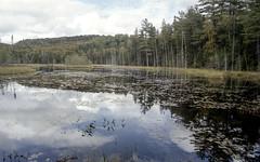 Northern Muskoka Pond and Sky Three (Bill Smith1) Tags: billsmithsphotography heyfsc kodakportra400 muskoka nlp2018 olympusom2n zuikolenses believeinfilm