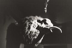 Bestia (zinaconzeta) Tags: yashica filmphotography film 35mm 35mmfilm fuji fujifilm documentary fotografiadocumental analogue analogic analogica blackandwhite bnw blancoynegro monochrome beast animal