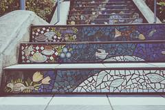 Tiled Steps (San Francisco) (diegomonteleone) Tags: california summer trekking nikon d7200 usa eeuu unitedstates goldenstate usinterior vsco instagram nature westcoast city cities tourist urbanism photogrid pacific pacificcoast sanfrancisco steps outersunset