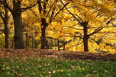 JJN_4887 (James J. Novotny) Tags: bench nikon d750 trees tree gardens garden gardenbotanical botanical chicagobotanicalgardens chicagobotanicalgarden fall leaves colors fallcolor unlimitedphotos