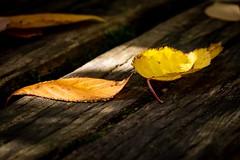 Last Lights Of Fall (wowafo) Tags: sonyflickraward macro fall autumn herbst blatt blätter leaf orange yellow gelb holzbank