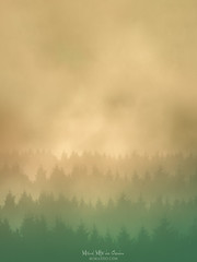 The forest (Mimadeo) Tags: tree trees silhouette silhouettes forest dreamy morning fog foggy fantasy mist landscape haze nature wilderness mountain mountains outdoor aerial remote far scenery slopes group distant scenic gradual repetition layer away layers valley misty hill sunset sunrise beautiful idyllic atmosphere atmospheric mood moody pine pines aerialperspective atmosphericperspective nostalgia background copyspace