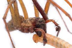 1JAC5872_ealing_181024 (_husky_) Tags: london places uk ealingcommon fujixt1 spider tenegaria zeisstouit50mmmacro
