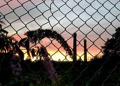Sunset over IKEA, Croydon, England (MJ Reilly) Tags: croydon waddon london england surrey iphone iphone7 ikea sunset dusk evening greatbritain uk fence buddleia urban city wire
