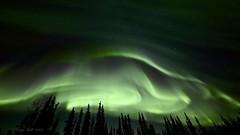 Rolling Curtains (Katy on the Tundra) Tags: northernlights auroraborealis aurora