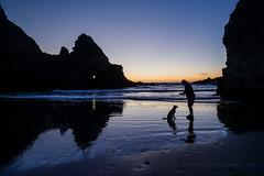 Good Boy! (Jeffrey Sullivan) Tags: oregon beach silhouette reflection sunset canon 5d makrk iv landscape nature travel photography seascape portrait dog border collie