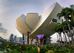 The Lotus (Dan and Holly) Tags: 2018 asia purple flower city cityscape danandhollythompson trees blue travel marinabaysands singapore green lotusflower yellow sky danandhollycom