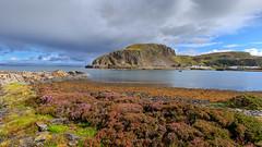 Ellenabeich from Easdale (Noel Wyn Davies) Tags: scotland easdale ellenabeich argyll firthoflorn west cliff hill heather sea coast sunshine clouds sky rocks