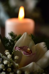 DSC_8140 (emina.knezevic) Tags: floralarrangement candle whiteorchid orchid nikon nikond3200 nikonphotography nikonphotgrapher closeup
