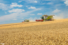 Downhill Wheat Harvest | CLAAS (martin_king.photo) Tags: harvest harvest2018 ernte 2018harvestseason combineharvester combine harvester new modernmachine summerwork powerfull martin king photo machines strong agricultural great czechrepublic agriculturalmachinery farm working modernagriculture landwirtschaft martinkingphoto moisson machine machinery field huge big sky agriculture power dynastyphotography lukaskralphotocz day fans work place yellow gold golden eos country lens rural camera outdoors outdoor goldenhour colours landscape fields lines claaslexion southmoravia claas flagship lexion780 terratrac clouds cloudyday bluesky
