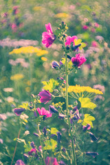 colorful meadow (madtacker) Tags: outdoor natur makro detail vintage art bokeh bubbles wiese blumen flowers meyergörlitz pentaflexcolor f28 50mm nikon d800 deutschland germany