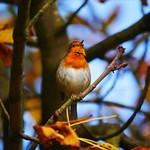 Autumn singalong thumbnail