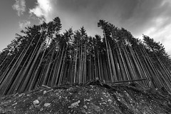 Forest (ValeTer_) Tags: black white tree sky woody plant monochrome photography cloud nikon d7500 state park usa wa wallace falls washington nature landscape statepark wallacefalls wallacefallsstatepark