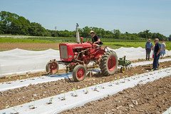 20180607acp130sp053.jpg (ukagriculture) Tags: horticulture weedcontrol cultivator weeds cultivation weed lexington kentucky