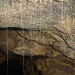 Waitomo Cave Tour