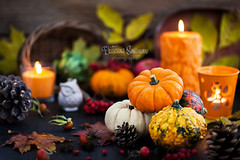 Halloween mood (Katty-S) Tags: agriculture autumn background dark colorful closeup decor decoration fall farm fest festive food garden green halloween harvest holiday jack leaf november nutrition october orange pumpkin red white owl seasonal september squash thanksgiving vegetables yellow rowanberry apple dogrose cone