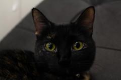 Vienna (2018) (mrsrezer) Tags: cat animal canon 700d eyes