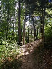 Wilderswil scenes 98 (SierraSunrise) Tags: switzerland wilderswil europe trail path forest