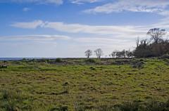 View from the footpath (stu cook) Tags: garlieston dumfriesgalloway scotlandpentaxk5