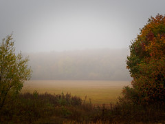 Autumn fog (banagher_links) Tags: olympus omd em10 mark iii mft micro 43 russia rain fog country
